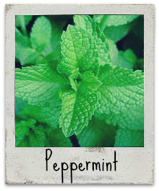 peppermintpol