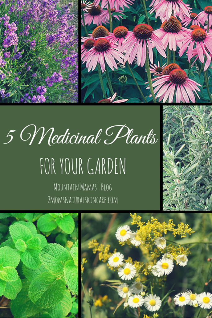 5 Medicinal Plants to grow in your garden
