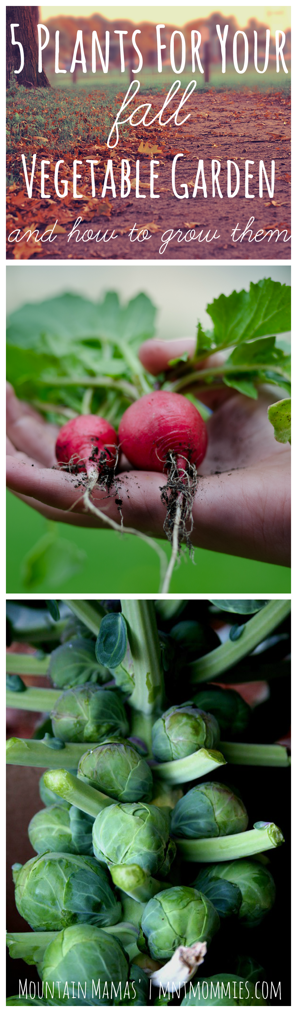 5 Plants For Your Fall Vegetable Garden and How to Grow Them | http://2momsnaturalskincare.com/