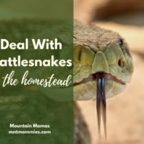 Rattlesnakes on the homestead | Mountain Mamas' | mntmommies.com