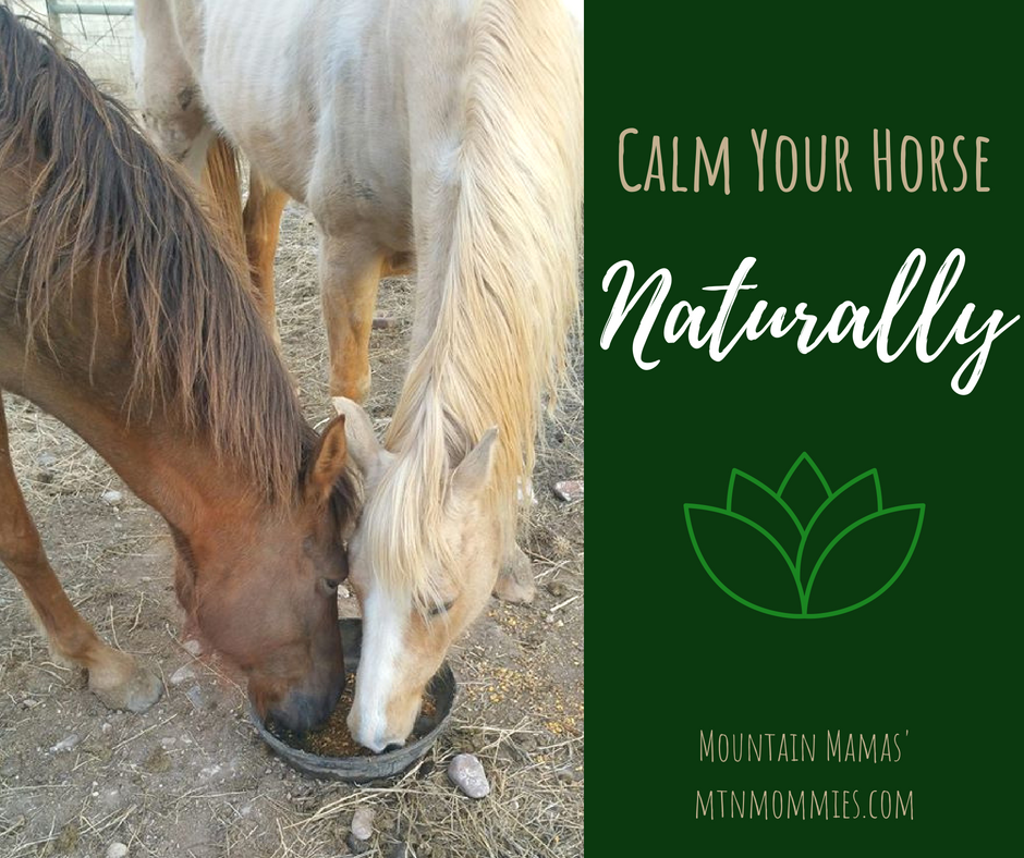 Calm Your Horse Naturally | Essential Oils For Horses| Mountain Mamas' | mntmommies.com