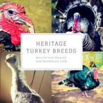 Heritage Turkey Breeds | Mountain Mamas' | mntmommies.com | #homestead